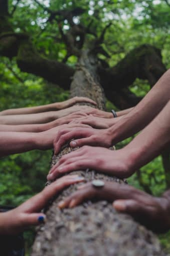 many hands on tree
