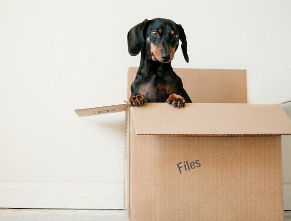 small dog in a file box