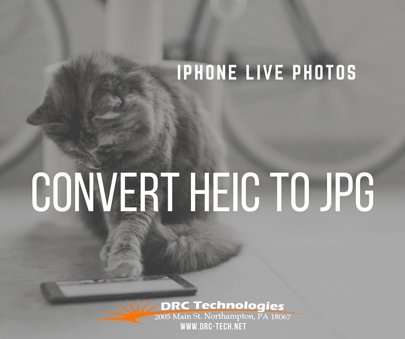 convert HEIC to JPG iPhone Live Photos Cat playing with phone DRC Technologies