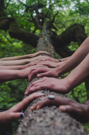 many hands on tree
