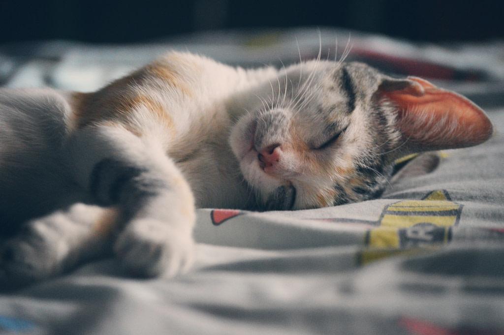 kitten sleeping peacefully