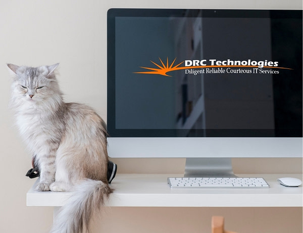 convert HEIC to JPG so you can store more cat photos picture of cat and computer