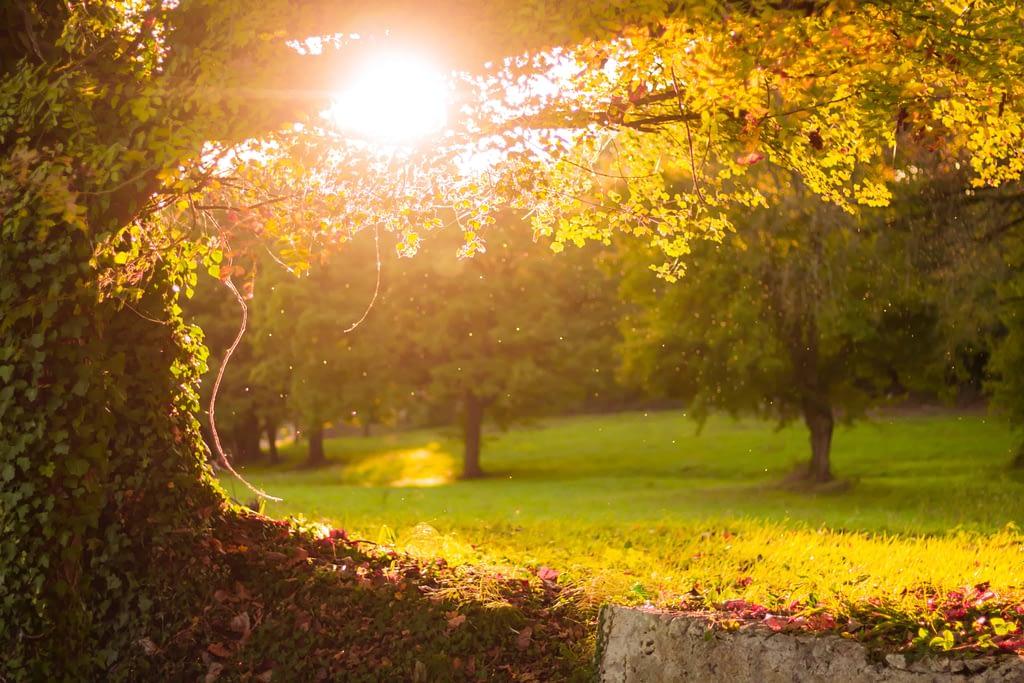 sunlight through trees in park
